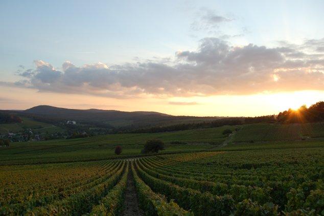 Lições da indústria do vinho